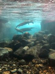 Aquarium 2