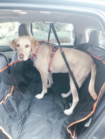 Car seat cover 8