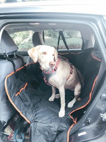 Car seat cover 9